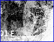 Figure 2D. Analysis of a Fingerprint Treated with Physical Developer on Counterfeit U.S. Currency Using Luminescence Chemical Imaging