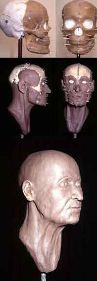 Figure 2B. Photographs detailing the reconstruction process of an older human. Top: lateral and frontal skull views. Middle: lateral and frontal muscle views. Bottom: finished reconstruction.