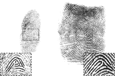 Figure 5: The latent print on the left is different from the known exemplar on the right, demonstrating an exclusion.