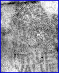 Figure 3B is a visible-absorption chemical image of a ninhydrin-treated fingerprint following multivariate statistical analysis.