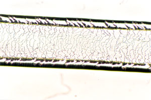 Figure 124 is a photomicrograph of a scale cast of muskrat hair.