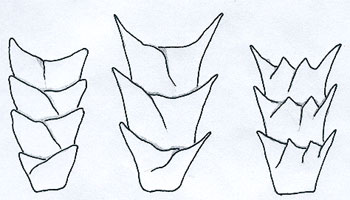 Figure 4 is a diagram of coronal scales.