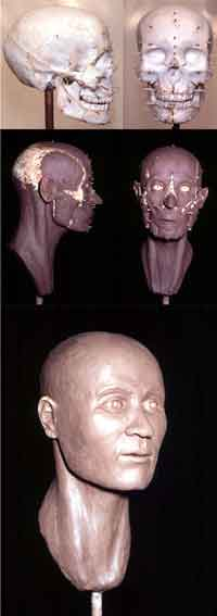 Figure 2A. Photographs detailing the reconstruction process of a young human. Top: lateral and frontal skull views. Middle: lateral and frontal muscle views. Bottom: finished reconstruction.