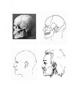 A photograph of a skull profile and three profile drawings of the skull, the reconstruction, and the possible appearance of a man.