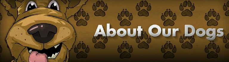 About Our Dogs: Header
