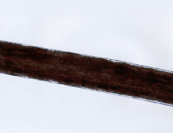 Figure 44 is a photomicrograph of head hair of Mongoloid individual.