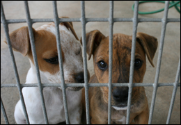 FBI agents helped bust the largest dog fighting operation ever seen in the U.S.