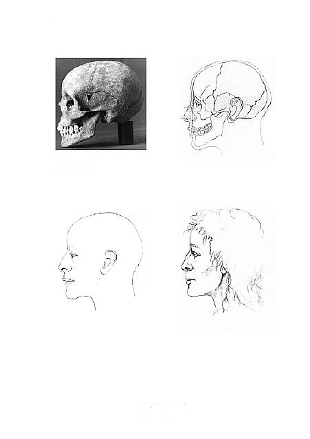A photograph of a skull profile and three profile drawings of the skull, the reconstruction, and the possible appearance of a woman.