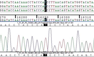 Nucleotide sequence data