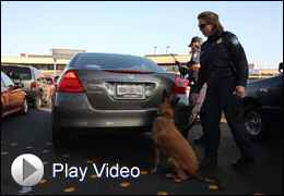 Border Guard with Dog Checking Car Truck with Play Video Button